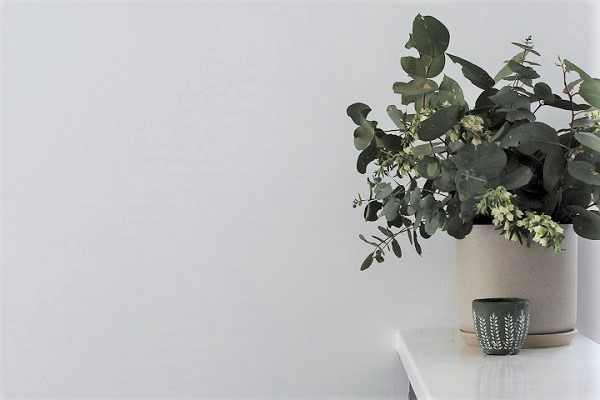 native flowers in a vase. Styled by One x One Interiors